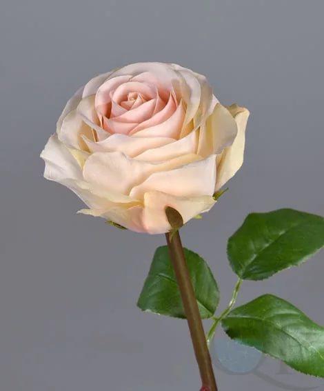 Роза ассорти