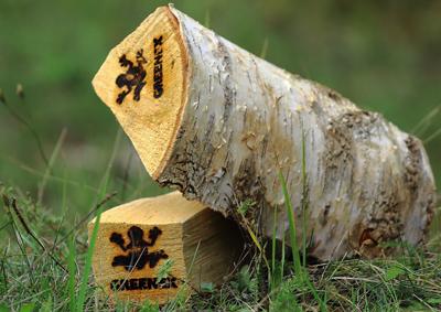 Дрова береза, вязанка 20 литров GREENEX