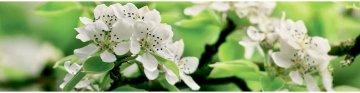 МДФ фартук  Цветущий сад №2