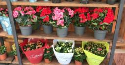 Предлагаем большой выбор комнатных растений